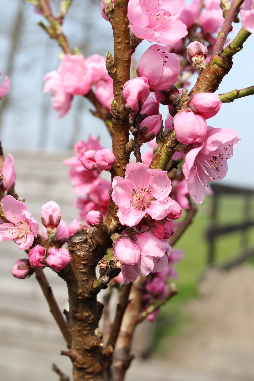 struiken-bloemen