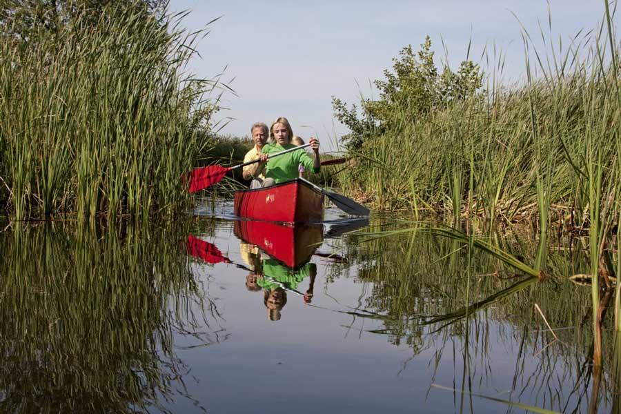 kano-watergeul-rietkraag